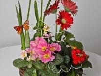 Aranjament plante naturale 01