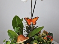 Aranjament plante naturale 09
