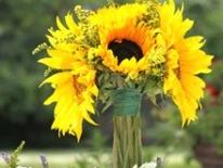 TWC-Sunflower-botez-006